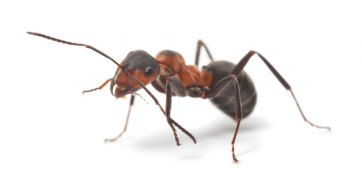 Nerd Night #28: Ants are Awesome